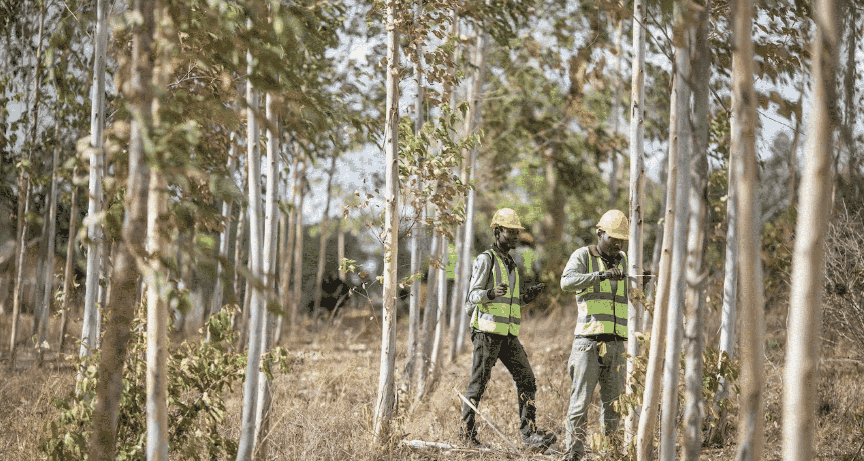 Apple contributes $200M to forestry Restoration projects