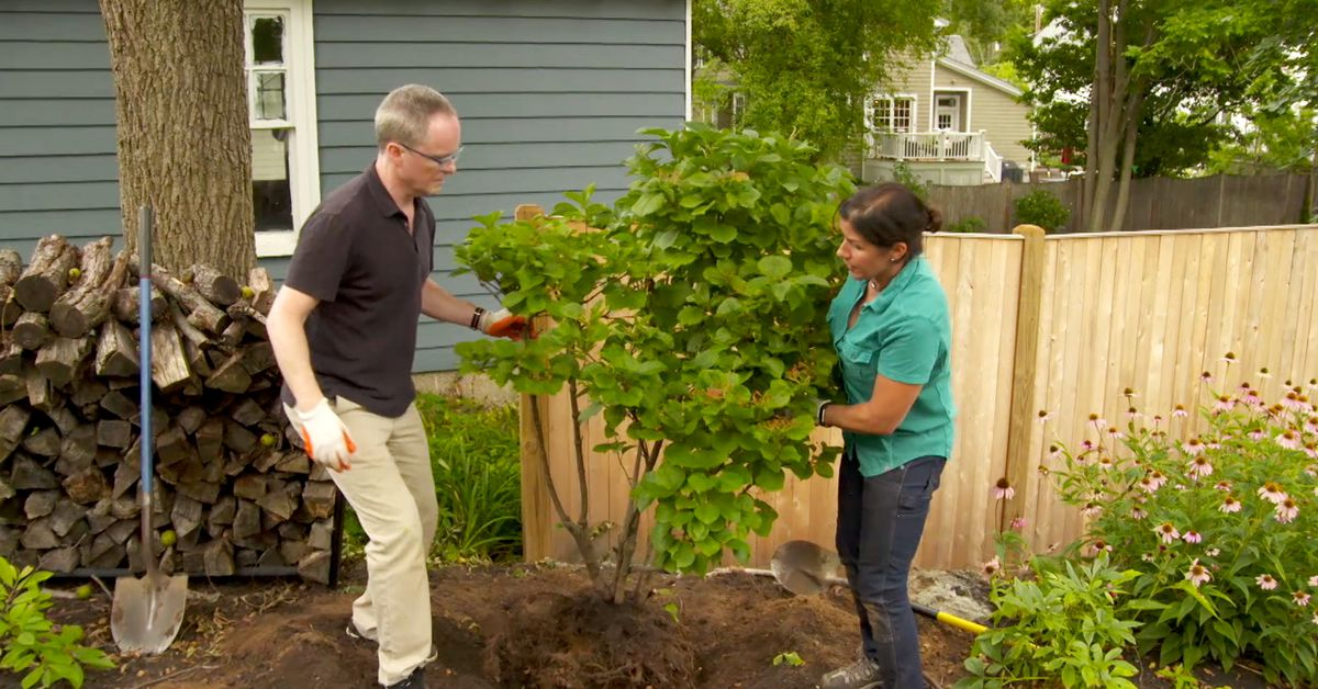 How to Revitalize a Landscape for Free